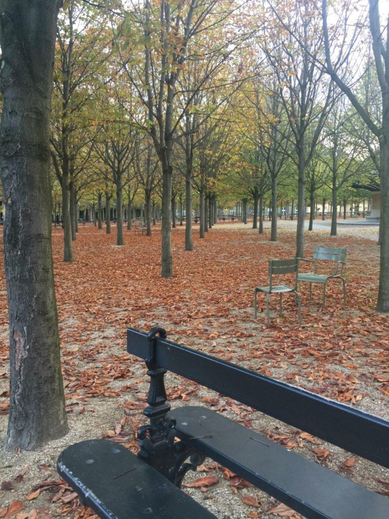 Autumn leaves in the Jardin du Luxembourg, Paris.