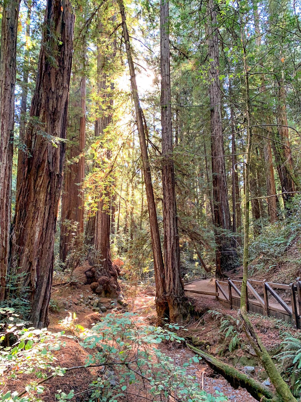 Armstrong Woods redwood preserve near Guernville, CA. Details at une femme d'un certain age.
