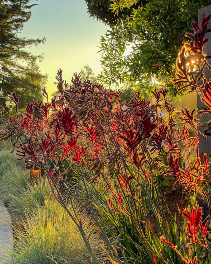 Flowers backlit near sunset.